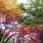 Saimyoji, Japon en automne